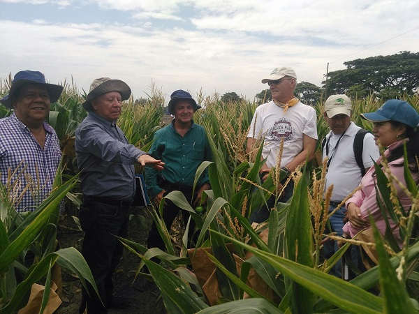 CIAT field day. Photo Marleni Rosero, communications specialist at HarvestPlus-CIAT.