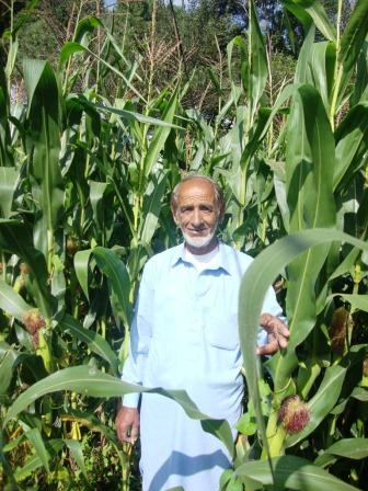 M. Sadeeq Tahir, the first QPM farmer in Pakistan who tested the newly introduced QPM hybrids in his field. Photo: M. Ashraf