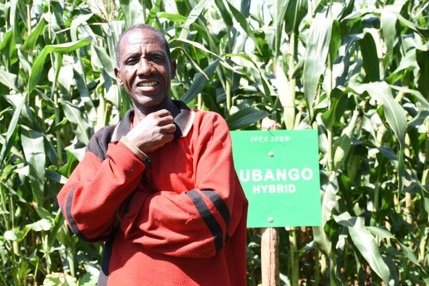 """This was my first try planting a drought-tolerant hybrid variety, and [after] seeing all this healthy maize, I am a believer,"" says Daniel Reuben (above), a farmer of over 30 years regarding Lubango. ""I can already tell that I will have a good harvest from the double cobs on each plant."" Normally, Reuben uses all his harvest to feed his family, but this year he expects to be able to produce more to sell and earn extra profit. Photo: Kelah Kaimenyi/CIMMYT."