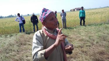 Puniram Chaudhary in Kailali District explains the advantages of growing new lentil variety Black Masuro over the local variety. Photo: Narayan Khanal