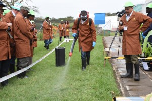 Participants see a demonstration of artificial inoculation at MLN screening site. photo K. Kaimenyi /CIMMYT