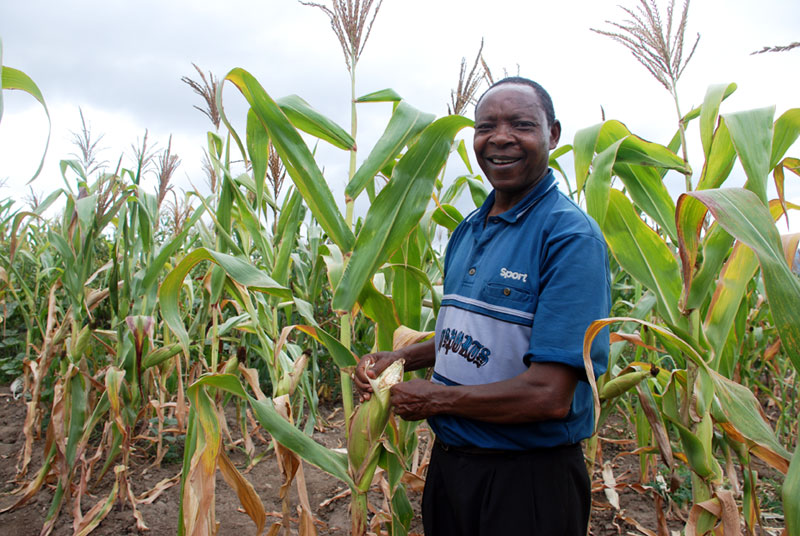 """The rain is very little here, but even with a little rain, this seed does well,"" says a smallholder farmer Philip Ngolania, in south-central Kenya, referring to a drought-tolerant maize variety he planted during the 2015 crop season. ""Without this seed, I would have nothing. Nothing, like my neighbours who did not use the variety."" Photo: Johnson Siamachira/CIMMYT"