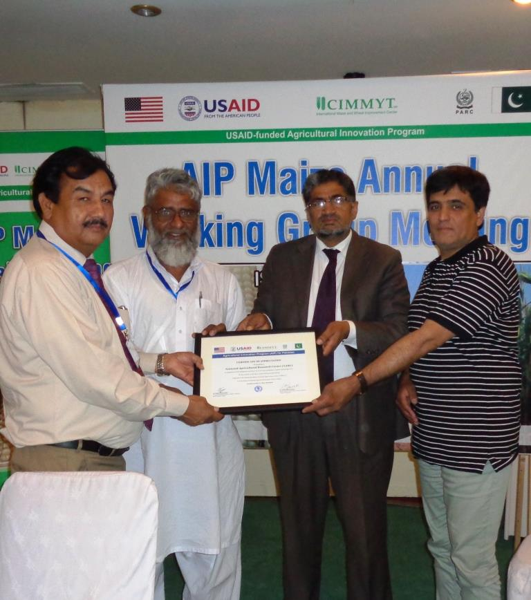 NARC's maize team receiving a certificate of appreciation. Photo: M. Waheed Anwar/CIMMYT