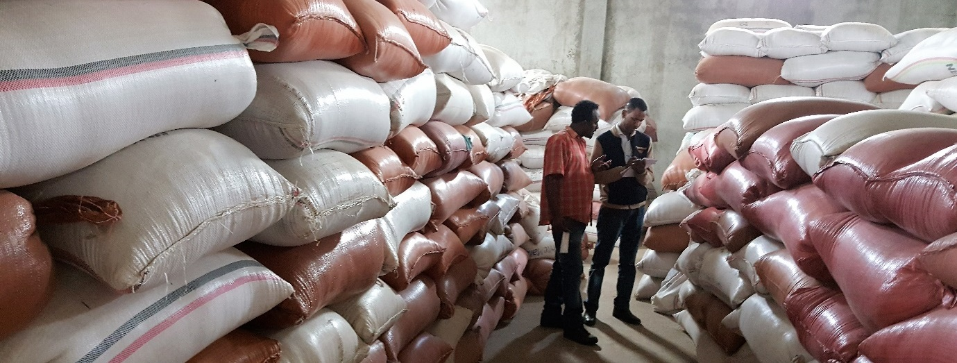 Stocks of maize seed have been certified for quality and are now ready to be distributed to farmers in Ethiopia's drought-affected districts. Photo: Tadele Asfaw/CIMMYT