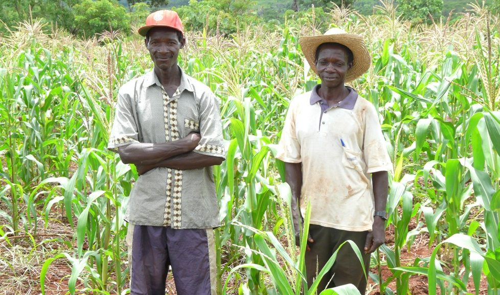 Araujo Njambo (right), a smallholder maize farmer in Mozambique, was used to the traditional way of farming that his family has practiced for generations, which required clearing a plot of land and burning all plant residues remaining on the soil to get a clean seedbed. However, as demand for land increases, this fuels deforestation and depletes soil nutrients. CIMMYT has been working with farmers like Njambo since 2006 to adapt sustainable intensification practices like CA to his circumstances. In remote areas of Mozambique, where Njambo's farm is located, CA systems provide significant benefits during dry spells because farmers have no access to irrigation and depend only on rainfall. In the 2013-2014 cropping season, Njambo harvested his best maize yield in the last six years thanks to CA. Photo: Christian Thierfelder/CIMMYT
