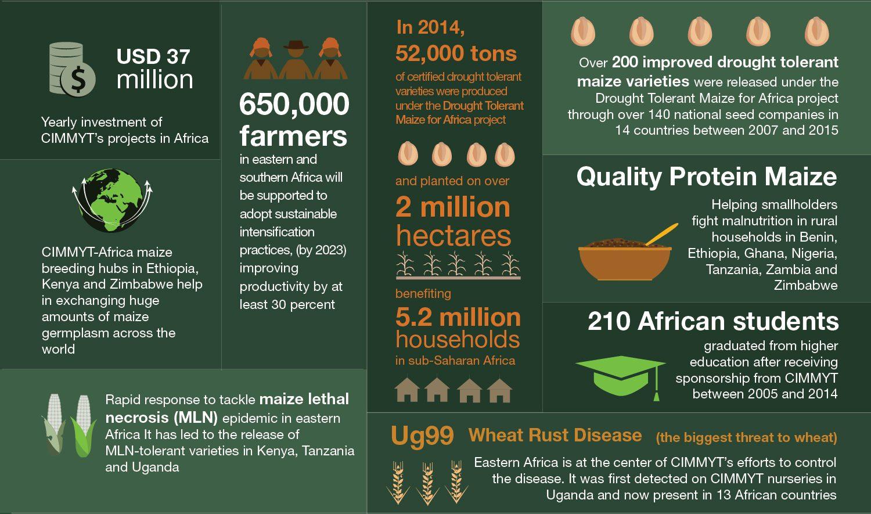 CIMMYT in Africa STATISTICS-01