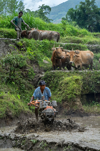 An Earthquake Recovery Support Program beneficiary operates the lightweight and versatile mini-tiller, which is easier and more cost-effective than using bullocks to plough fields. Photo: P. Lowe/CIMMYT