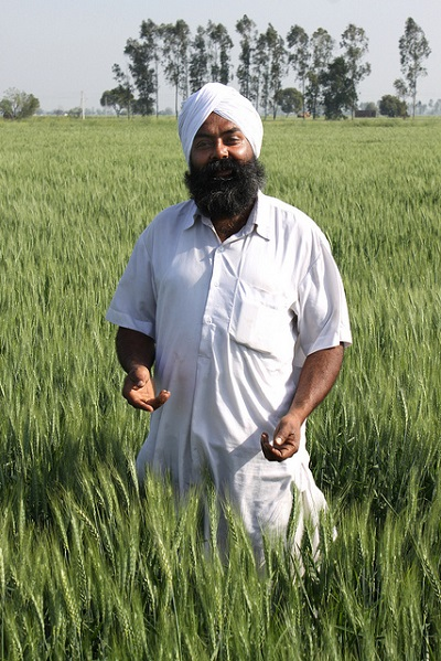 Farmer Chamkaur Singh in his wheat field in Fatehgarh Sahib district, Punjab, India. The field was sown with a zero tillage wheat seeder known as a Happy Seeder, giving an excellent and uniform crop. Photo: P. Kosina/CIMMYT