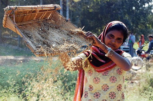 Climate change is likely to have a huge impact on cereal farmers in India. CIMMYT/Emma Quilligan