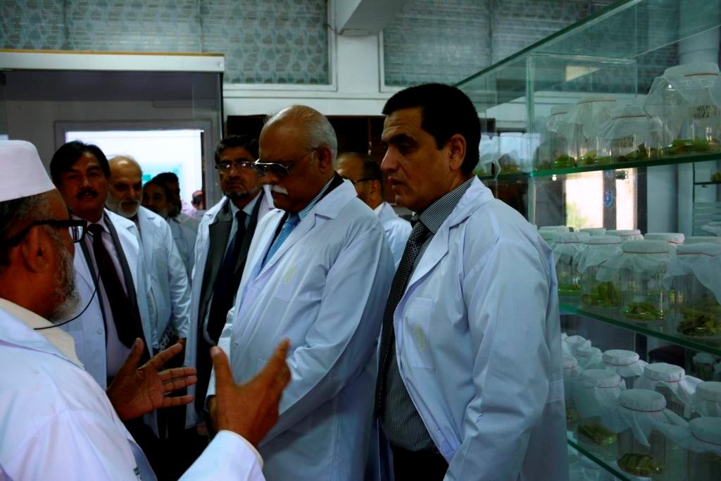 Habib Iqbal, maize entomologist, explaining about the maize stem borer mass rearing facility. Photo: CIMMYT