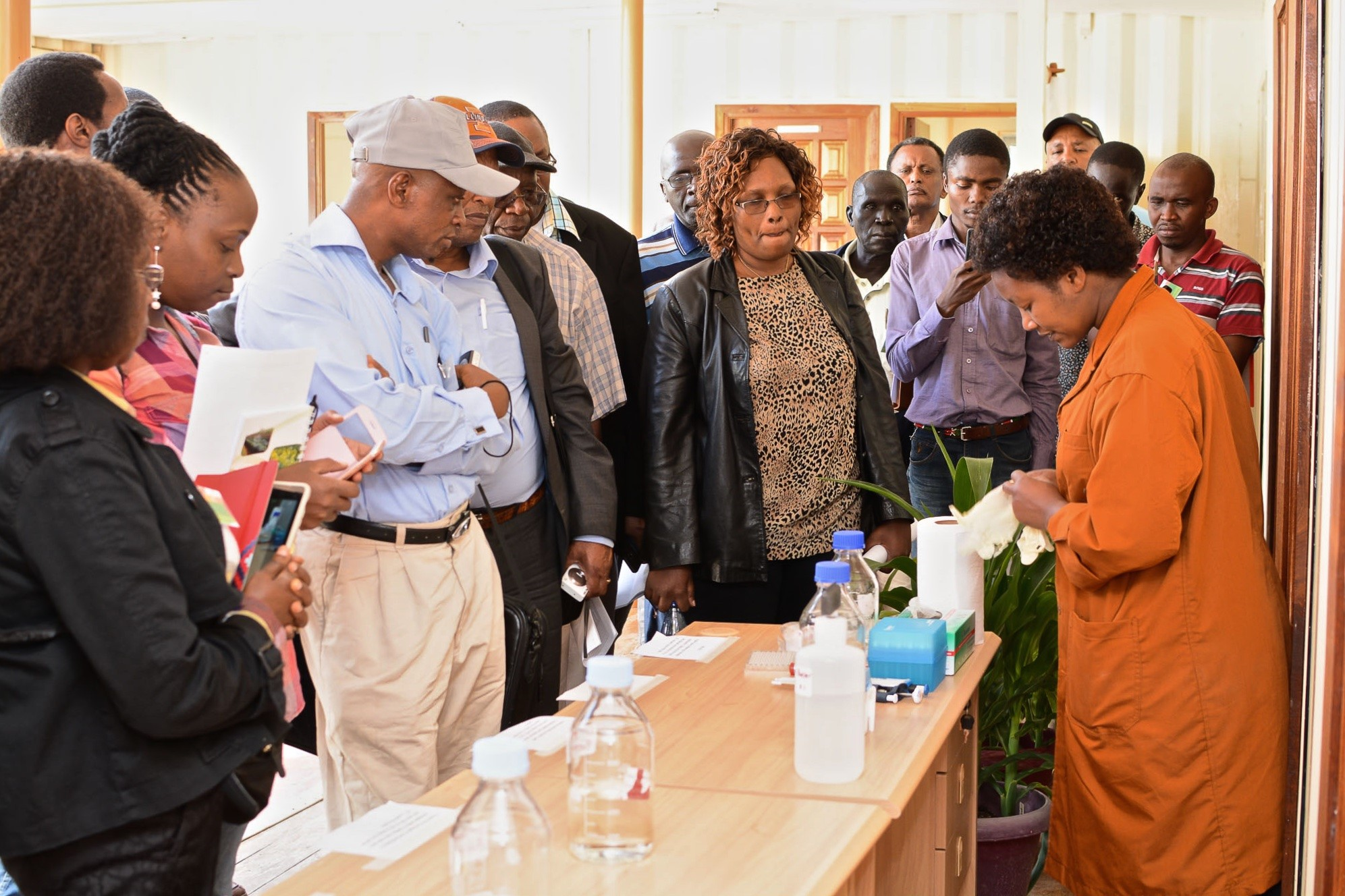 Anne Wangui, a seed health technician at CIMMYT demonstrate DAS–ELISA method used for detecting MLN-causing viruses. B.Wawa/CIMMYT