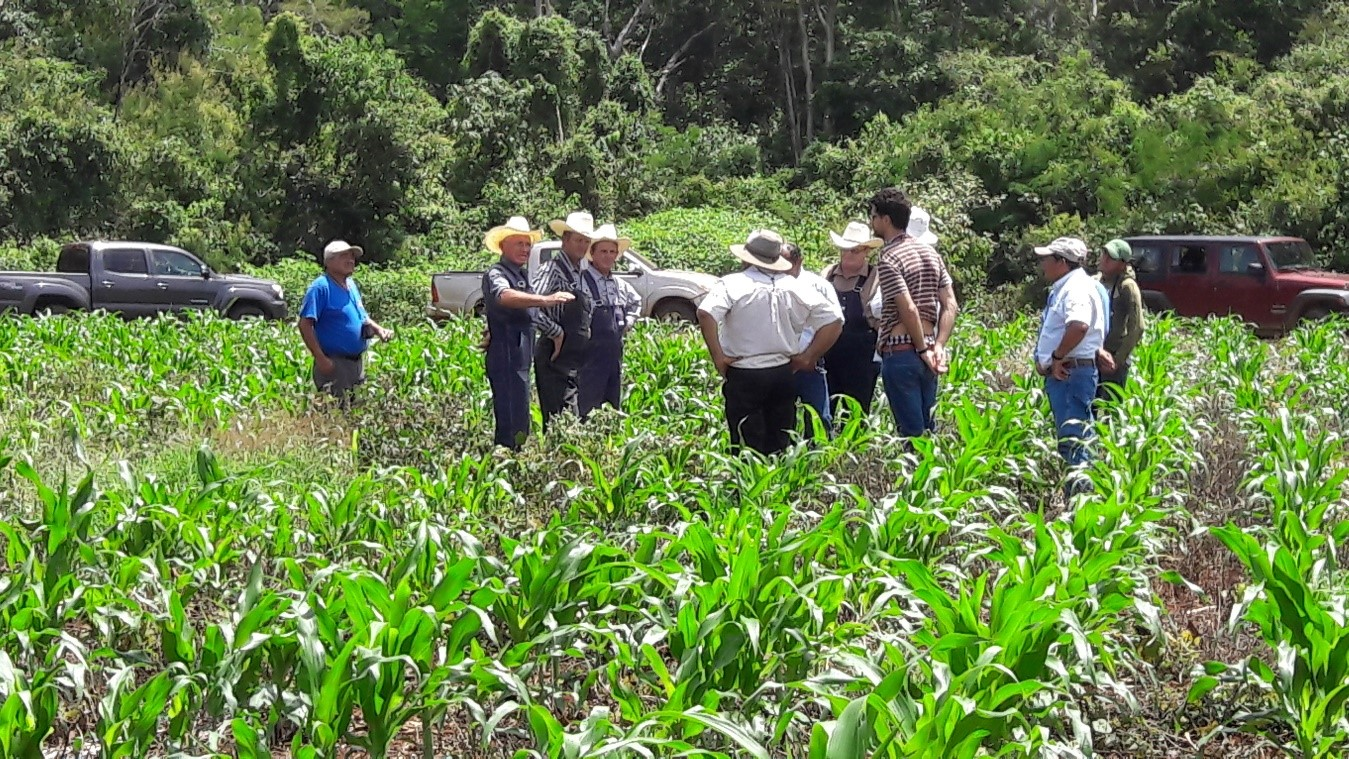 Visit to extension area of Mennonite farmers in Hopelchen, Campeche, Mexico.
