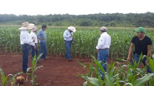 Technician Vladimir May Tzun visits Santa Enna research platform to make fertility checks in Hopelchen, Campeche. (Photo: CIMMYT)