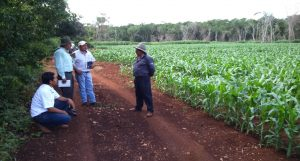 Tour of field trials sown with MasAgro maize materials in Hopelchen, Campeche, Mexico. (Photo: CIMMYT)