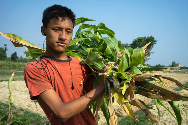 Researchers are seeking to re-engage rural youth who are increasingly abandoning agriculture to work in cities, raising the question who will grow our food in the future? Photo: P.Lowe/CIMMYT