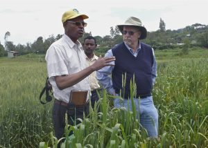 Ronnie Coffman (r), Cornell plant breeder and director of the new Delivering Genetic Gain in Wheat (DGGW) project, surveys rust resistant wheat in fields of the Ethiopian Institute for Agricultural Research with Bedada Girma (l), wheat breeder and Ethiopian coordinator for new project. Ethiopia is a major partner in the new grant. CREDIT: McCandless/Cornell