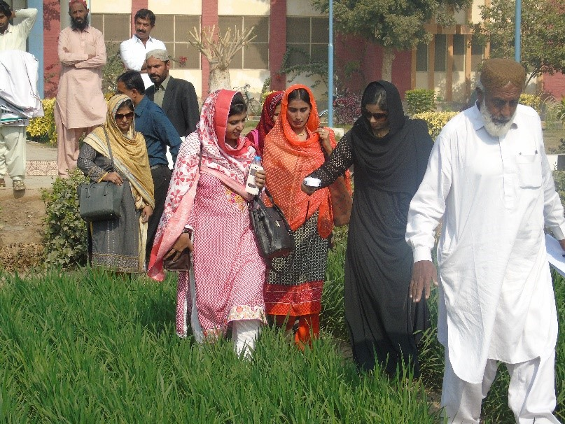 Wheat researcher with Green Seeker at Wheat Research Institute Sakrand, Sind Province, Pakistan. Photo: Sarfraz Ahmed