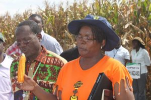 Thokozile Ndhlela shows pro-vitamin A maize to visiting scientists at CIMMYT-Southern Africa regional office in Harare, Zimbabwe. Photo: Johnson Siamachira/CIMMYT