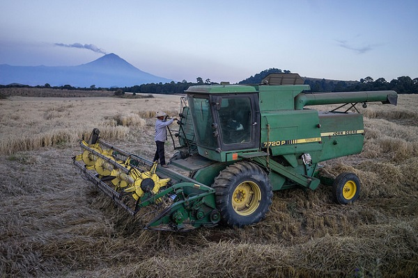 Wheat harvest in Juchitepec, Estado de México. Photo: P.Lowe/CIMMYT