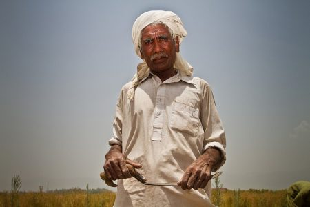 A day laborer in Islamabad, Pakistan pauses from his work of harvesting wheat by hand. Photo: A. Yaqub/CIMMYT