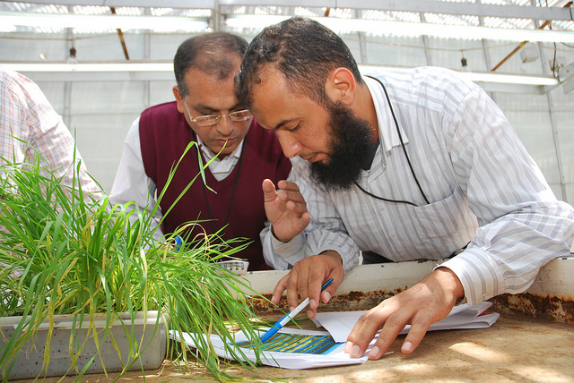Wheat trainees study seedling rust symptoms. Photo: X. Fonseca/CIMMYT.