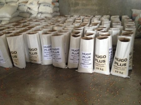 Hugo Plus seed bags ready to be sealed and shipped. Photo: L. Eugene/CIMMYT
