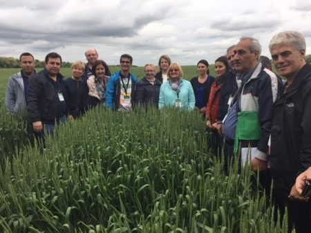 The sixth International Winter Wheat Travelling Seminar was recently held in Krasnodar, Russia, to improve wheat breeding across West and Central Asia. Photo: CIMMYT