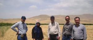 Picture shows (L-R): Mahesh Kumar Gathala (CIMMYT), Marta Lopes (CIMMYT-Turkey), Jalal Kamali (CIMMYT-Iran), Mozaffar Roustaii (DARI) and Loghman Alipashaei a farmer in Iran. CIMMYT/Marta Lopes