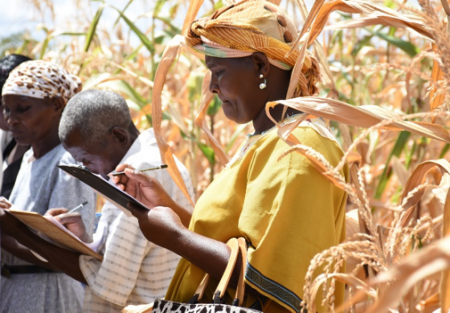 Participatory farmer evaluations allow farmers themselves to assess crops at demonstration plots, to compare a range of improved seed products against local/ traditional seed. Photo: K. Kaimenyi/CIMMYT