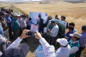 Stakeholders visit project farms and the Dryland Agricultural Research Institute in Iran during a Wheat Landraces project workshop in July, 2017. Photo: A.Morgunov/CIMMYT