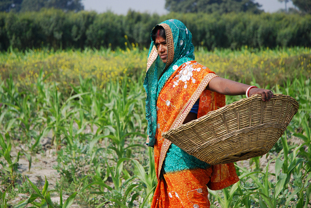 Global food production must increase by 70 percent to meet a population of more than 9 billion in 2050. India, with a current population of 1.3 billion and rising, is central to this challenge. Photo: M. DeFreese/CIMMYT