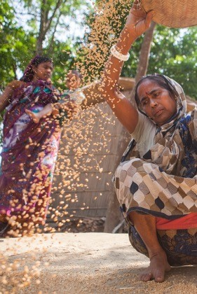Delegates from across South and South East Asia will gather in Dhaka, Bangladesh next week to ensure farmers across the region have the resources they need to better respond to climate change. Above, woman in Faridpur, Bangladesh winnowing wheat grain after harvest. Photo: Saikat Mojumder.