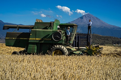 Harvester operator Sergio Araujo and truck driver Antonio Mejia harvest wheat for farmer Pedro Mejia near Popocatépetl volcano in Juchitepec, Estado de México. Photo: CIMMYT/P. Lowe