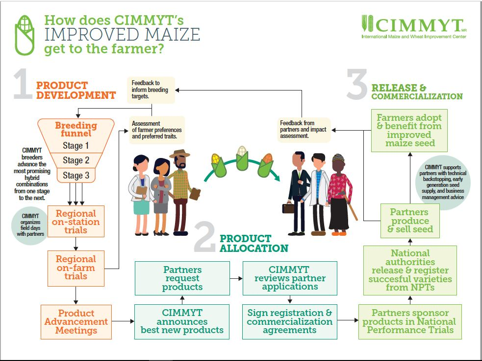 How does CIMMYT's Improved Maize Seed get to the Farmers (Oct 2017)