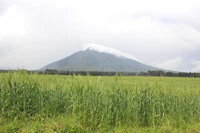 Wheat surrounds the border of the Volcanoes National Park in Rwanda. Photo: F. Baudron/CIMMYT