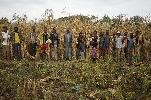 Farmers group & demonstration drought tolerant (DT) maize plot in farmers field, Lobu Koromo village, Hawassa Zuria district Photo: CIMMYT/P. Lowe