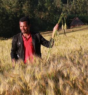 """Abebe Abora, farmer in the Doyogena District of Ethiopia's Southern Nations, Nationalities, and Peoples' Region (SNNP), has been a member of a seed production cooperative for four years. """"Because of modern technology such as improved wheat varieties, farming is better for me than it was for my father,"""" he said. Photo: CIMMYT/A. Habtamu"""