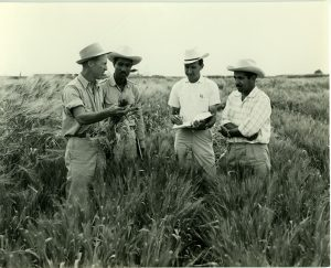 Norman Borlaug works with researchers in the field. Photo: CIMMYT archives
