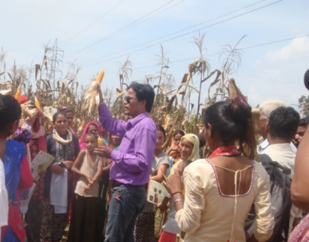 NSAF field research technician showing a demonstration variety of maize to farmers in Kailali, Nepal. Photo: D. Joshi/CIMMYT