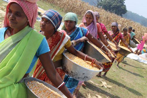 Women farmers ready to bag up maize grain for storage. Photo: CIMMYT/ Wasim Iftikar