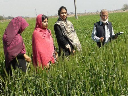 El CIMMYT y el Consejo de Investigación Agrícola de Pakistán celebrarán, el 8 de marzo, un seminario sobre la mujer y la juventud en los sistemas agrícolas basados en el trigo. Foto: archivos del CIMMYT