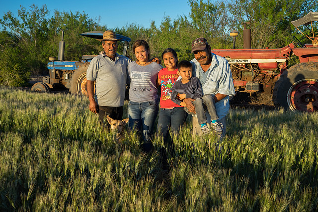 Farmers family in Obregon, Mexico. Photo: CIMMYT/ Peter Lowe