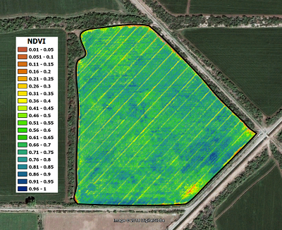 NDVI map. Photo: CIMMYT.