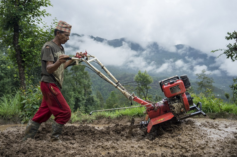 Farmer Jhalak Bhandari uses a mini tiller to puddle his field for transplanting rice in Thulochaur, Sindhupalchok. Photo: CIMMYT/P. Lowe.