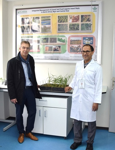 Martin Kropff, CIMMYT director general (left) and Mustapha El-Bouhssini, ICARDA entomologist, in that center's lab at Rabat, Morocco.