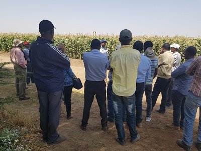 Seed company mangers briefed on QPM seed multiplication during visitors day. Photo: CIMMYT.
