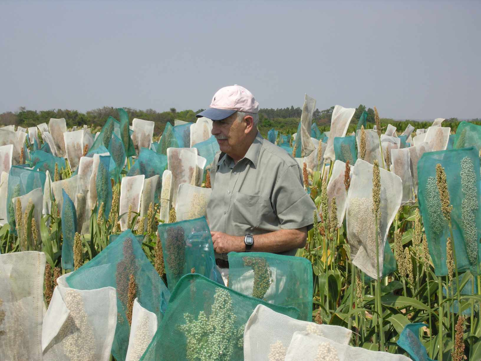 Plant physiologist Abraham Blum in the field. (Photo: Courtesy of the Journal of Experimental Botany)