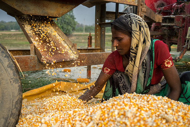 A farmer checks her maize as it comes out of a shelling machine powered by a four-wheel tractor, Nepal. (Photo: P.Lowe/CIMMYT)
