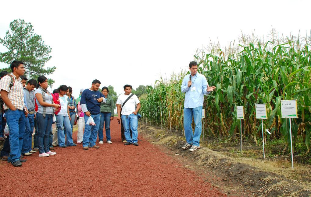 """Germán Mingramm, estudiante de doctorado, muestra el trabajo de mejoramiento del maíz del CIMMYT durante una visita de estudiantes durante el evento """"CIMMYT a Puerta Abierta"""" de 2009. (Foto: CIMMYT)"""