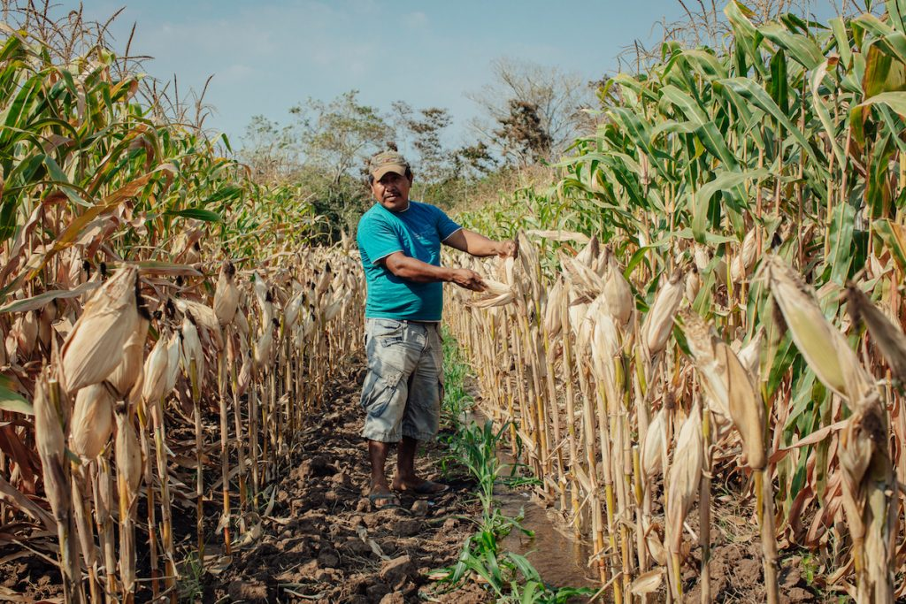Farmer Rómulo González on his maize plot.